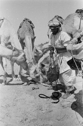 Portrait of Hamad, a Bedouin ...