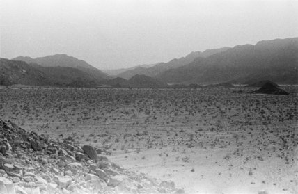 View of a wadi dotted ...