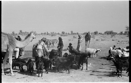 View of Wahiba Bedouin at ...