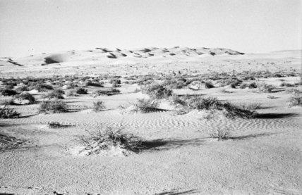 View of a sabkha, salt ...
