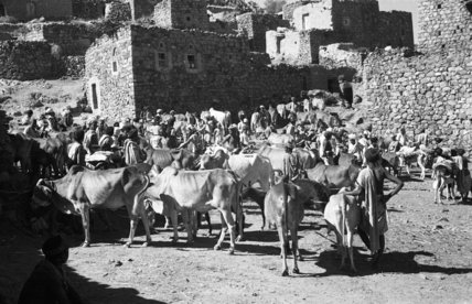View of livestock at a ...
