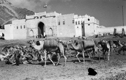 View of a camel caravan ...