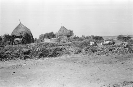 Huts at Umm al Khashab. ...