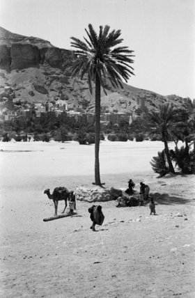 View of a palm tree ...