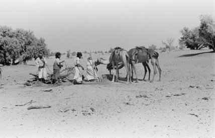 Wilfred Thesiger's party watering camels ...