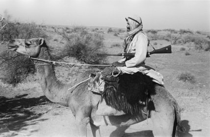 Profile portrait of an Arab ...