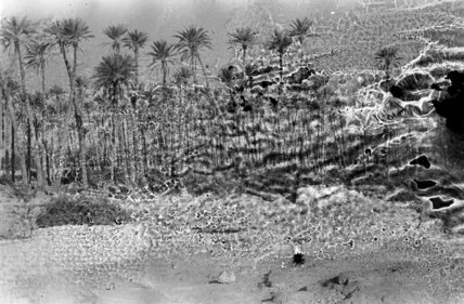 A palm grove at Ghayl ...