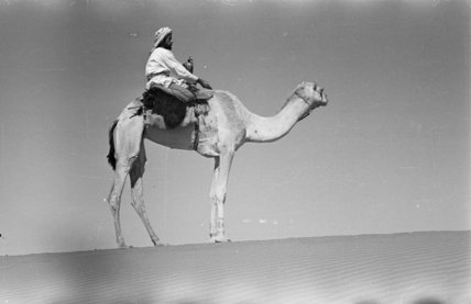 Portrait of an Arab falconer ...