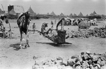 At Sabya. A camel-driven press ...