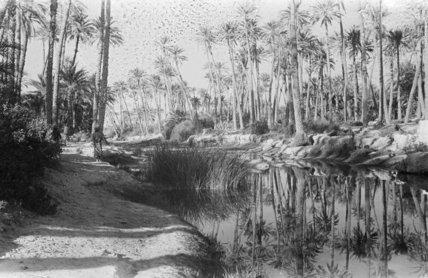 A palm grove at Ghayl ...