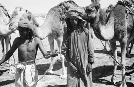 Bedouin watering their camels at ...