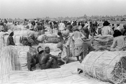 View of palm traders and ...