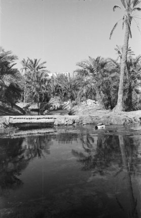 View of an oasis on ...