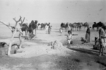 View of Utaybah Bedouin watering ...