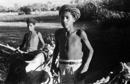 Two boys with donkeys near ...