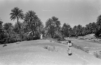 View of a date palm ...