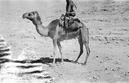 A member of Wilfred Thesiger's ...