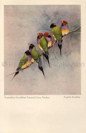 Orient Line menu - Australian wild birds