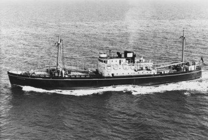 RINGDOVE at sea