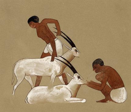 Oryx Scene