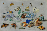 Butterflies and other insects, by Jan van Kessel I