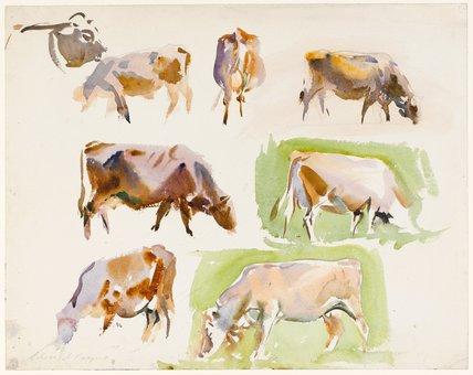 Studies of Cows, by John Singer Sargent