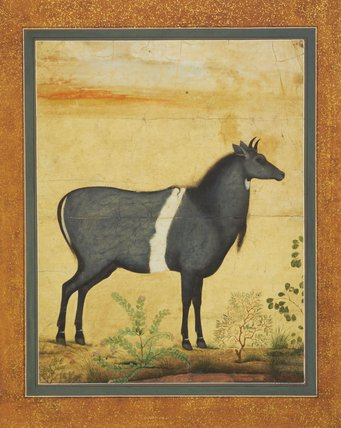 Nilgai standing, plants in the foreground, by Ustad Mansur