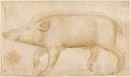 A wild boar, by Pisanello