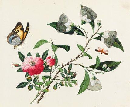 Unidentified Species, Chinese