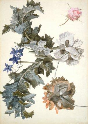 Opium poppies, delphinium & rosebud, by Eelke Jelles Eelkema