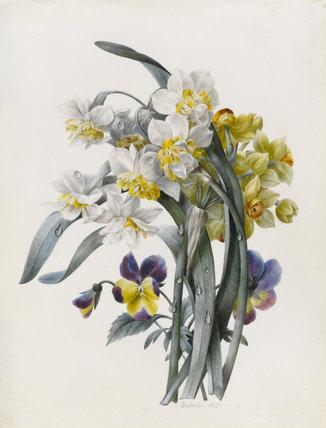 Narcissi and pansies, by Nathalie d'Esmenard