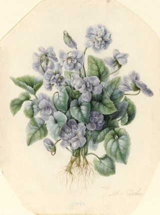 Violets, by Aline Corbin