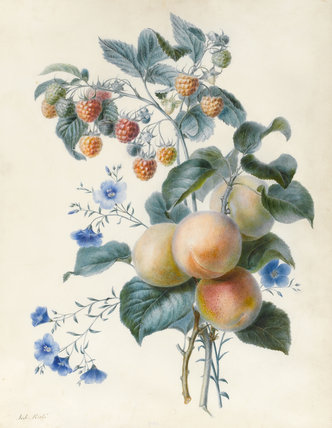 Flowers with Plums and Raspberries, by Adele Riche