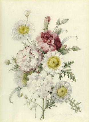 Bunch of mixed carnations and marigold, by Redoute