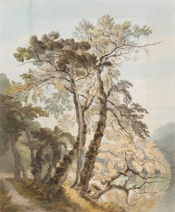 Trees at Peamore Park, by John White Abbott
