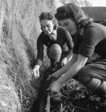 Land Girls Audrey Prickett and Betty Long set a rat trap in a hay stack as part of their training on a Sussex farm during 1942.