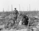 A South African nurse places a wreath on her brother's grave at Delville Wood, on the Somme battlefield, 17 February 1918.