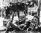 British troops rest with their mules after crossing the Chindwin River near Sittaung in Burma, 17 November 1944.