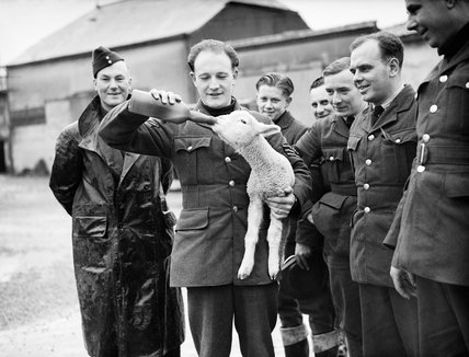 RAF airmen at an airfield in France with their adopted mascot 'Aloysius', 18th December 1939.