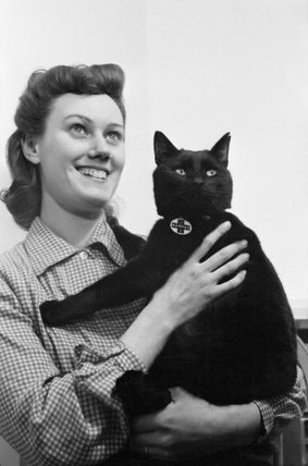 Mrs Day and her cat 'Little One' in London during 1941. 'Little One' is wearing a National Air Raid Precautions for Animals Committee collar to help ensure the cat is returned to his owner should he stray during the blitz or black-out.