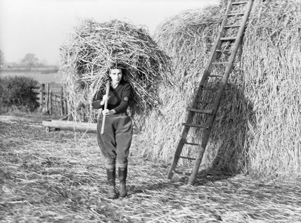 A Land Girl carrying a large forkful of hay in order to feed cattle at the Women's Land Army training centre at Cannington in Somerset during 1940.
