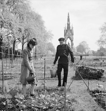 Allotments in Kensington Gardens, London, all part of the 'Dig for Victory' scheme in 1942.