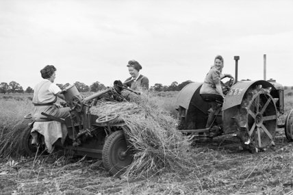 Three Land Girls harvest flax on a farm in Huntingdonshire during 1942.