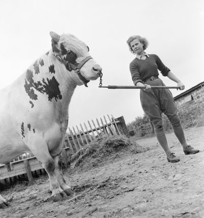 Land Girl Iris Joyce leading a bull at a farm somewhere in Britain during 1942.