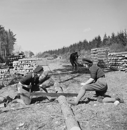 Two Land Army girls sawing timber into lengths for pit props at the WLA training centre at Culford, Suffolk during 1942.