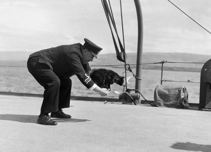 Lieutenant Commander R H Palmer OBE, RNVR plays with Peebles, the ship's cat, on board HMS WESTERN ISLES at Tobermory, Mull, in 1944.