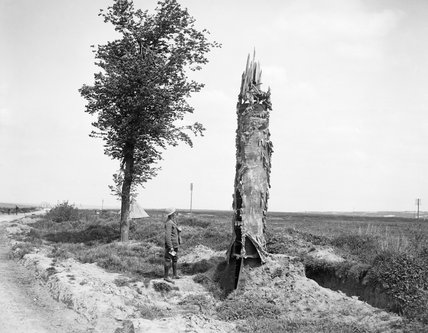 A canvas and steel tree observation post, near Souchez, 15 May 1918.