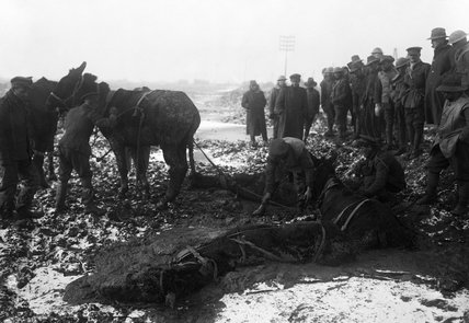 British soldiers try to rescue mules from the mud near Bernafay Wood on the Somme, 25 December 1916.
