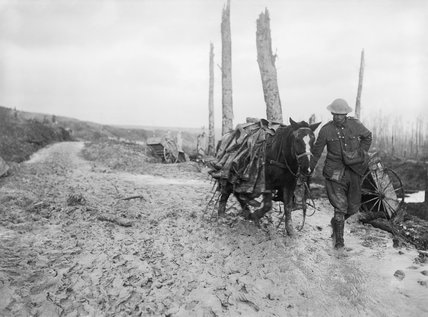 A pack horse loaded with rubber trench boots (waiders) is led through the mud near Beaumont Hamel on the Somme battlefield, November 1916.