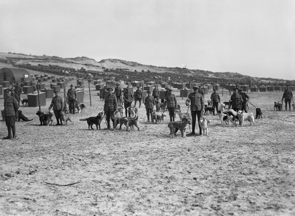 A group of dog handlers stand with their dogs at the British Army kennels near Etaples, 20 April 1918.